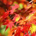 東京都内の紅葉が綺麗な名所&穴場おすすめスポット42選!